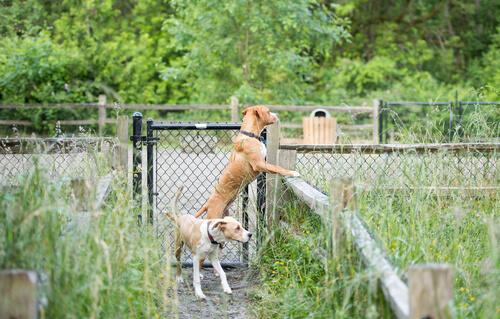 se escapa perro de casa: huye
