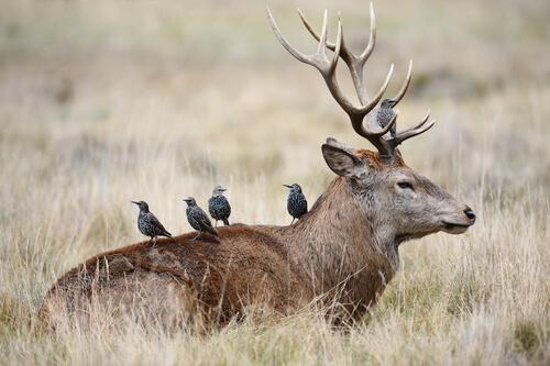 Simbiosis del reino animal
