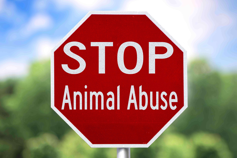 stop-maltrato-animal