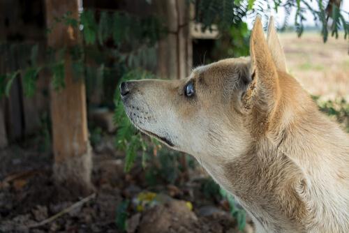 Tener perro ciego: consejos
