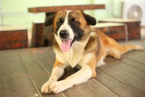 Tener perro ciego: cuidados
