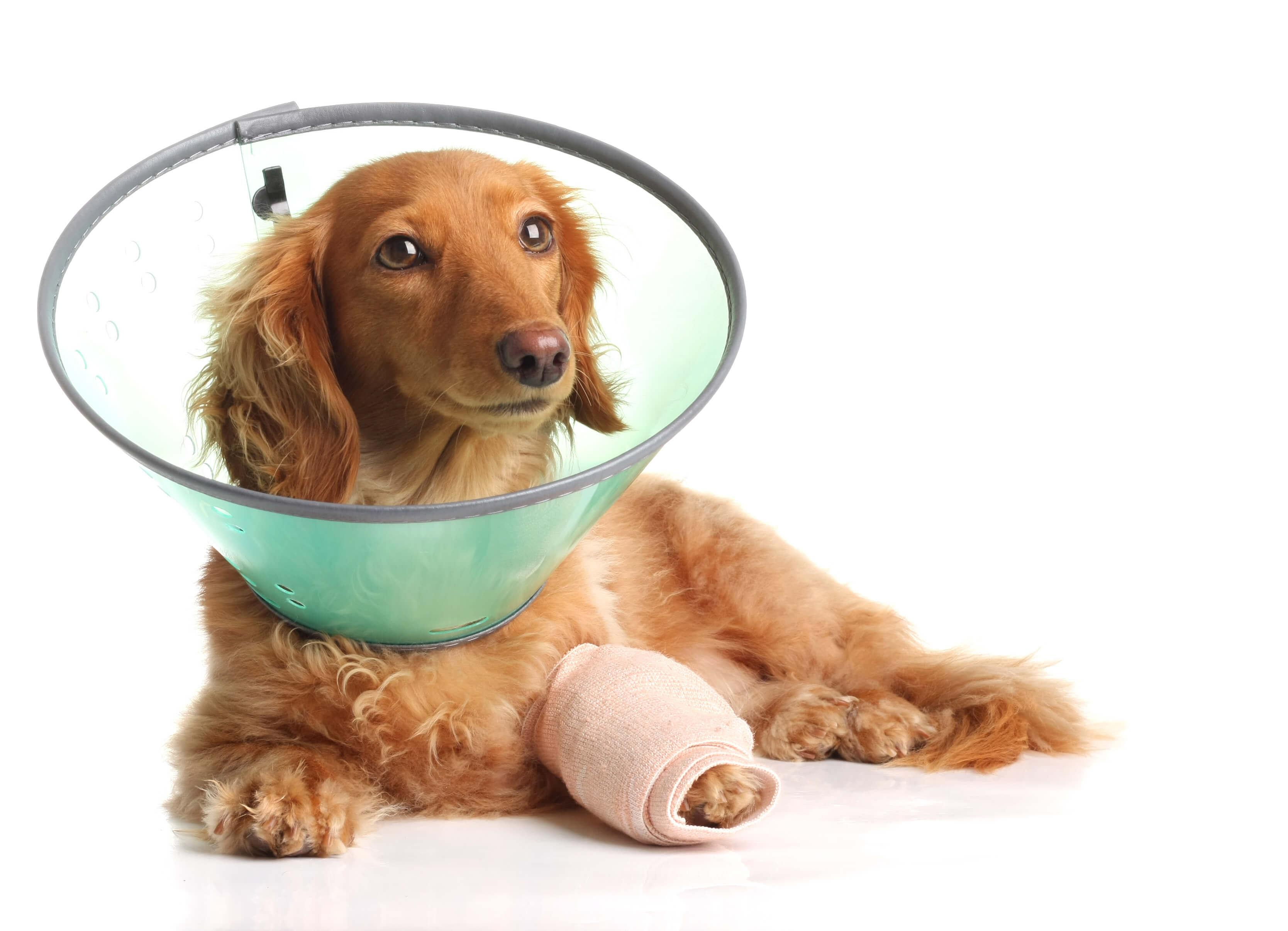 tratamiento-toc-perros