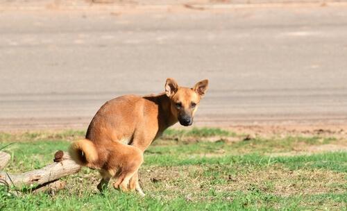 Tratar diarrea en perros: alimentación