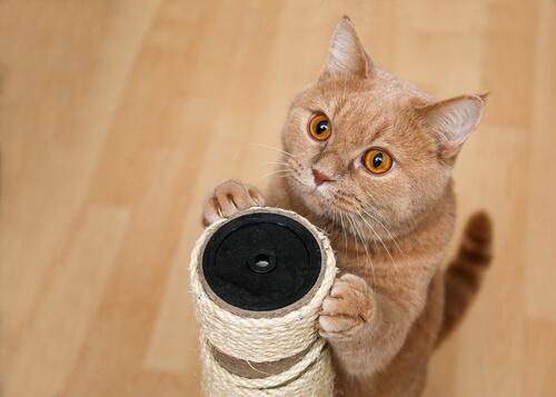 4 trucos que puedes enseñarle a un gato
