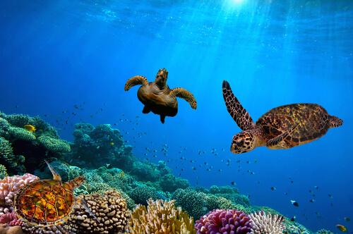 7 destinos para ver animales salvajes en libertad