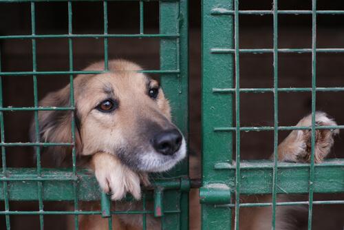 Protectoras de animales: cómo acabar con una situación insostenible
