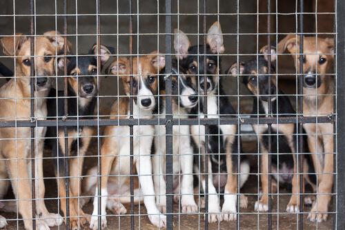 ¿A qué edad se puede castrar o esterilizar a un perro?