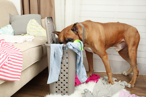Acostumbrar a un perro a quedarse solo: consejos