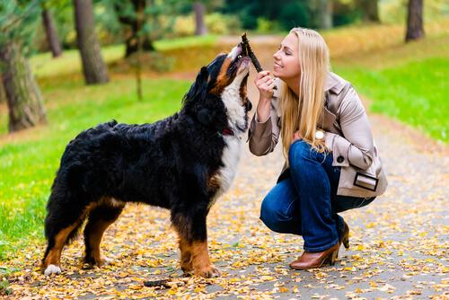 Amor entre perro y dueño