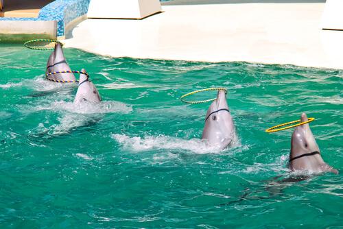 Animales con más inteligencia emocional: delfín