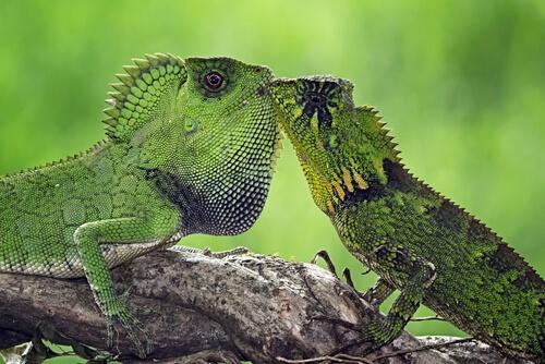 Animales de una sola pareja