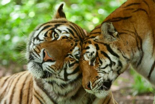 Animales fieles una sola pareja: monógamos