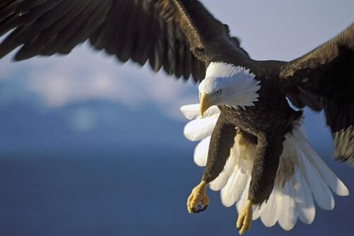 7 ectoparásitos que afectan a las aves rapaces