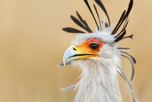 ¿Qué son las aves rapaces?