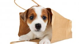 Bolsos para perros: ventajas y desventajas