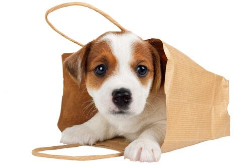 ¿Es bueno llevar a tu perro en un bolso?