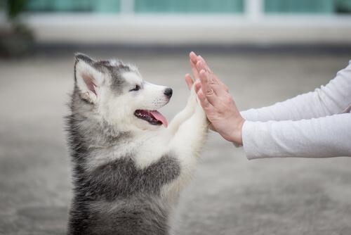 Los cachorros y el ejercicio: ejemplos