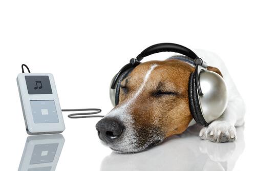Canal de música para perros