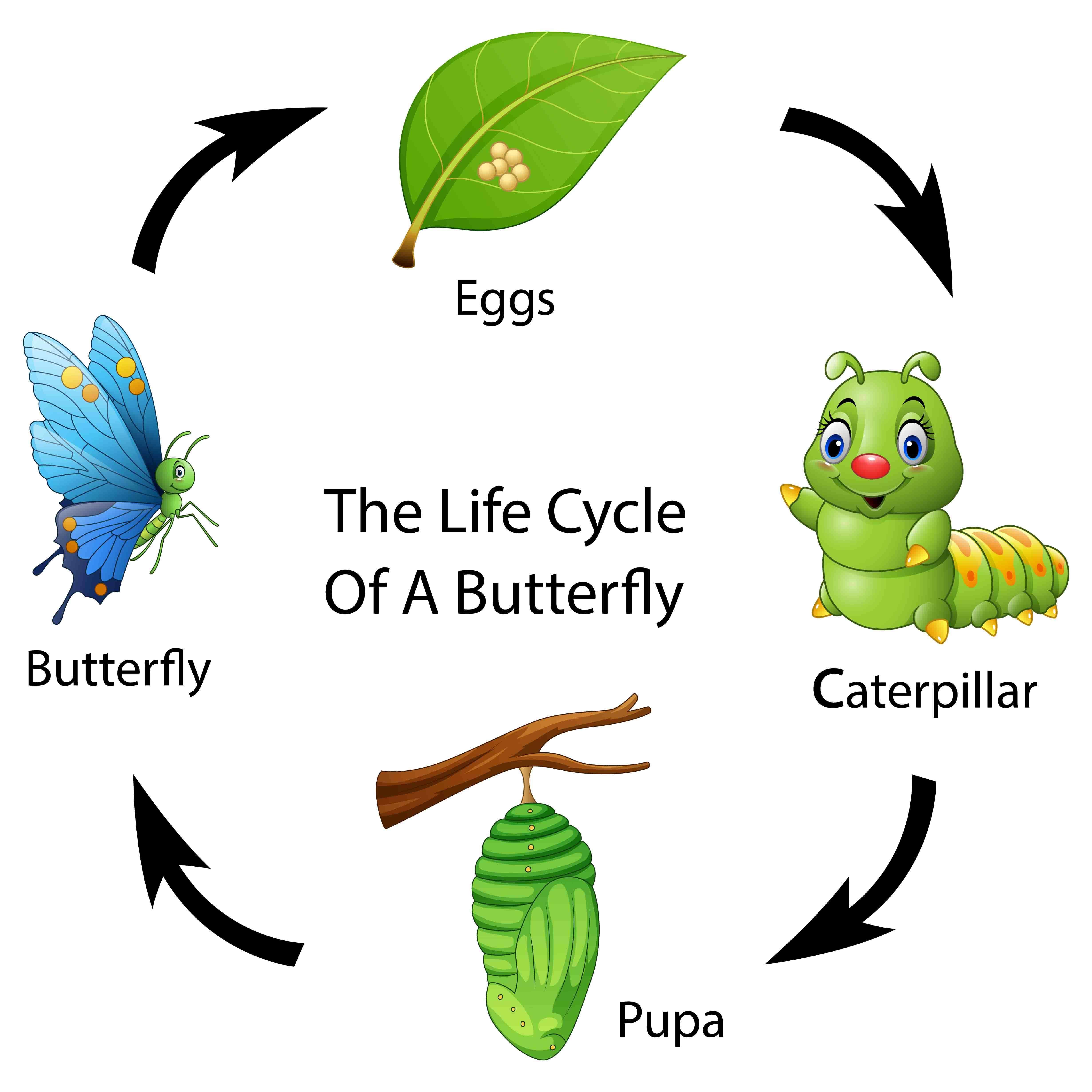 Ciclo circadiano en insectos