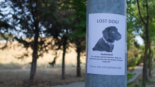 Cómo encontrar a un perro perdido