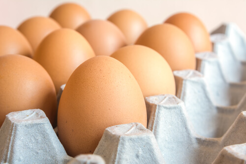 Cómo mejorar la calidad de los huevos de gallinas