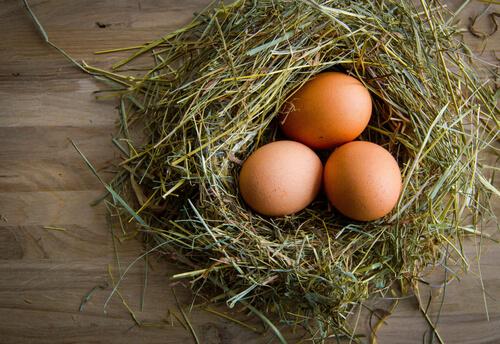¿Cómo mejorar la calidad de los huevos de gallina?