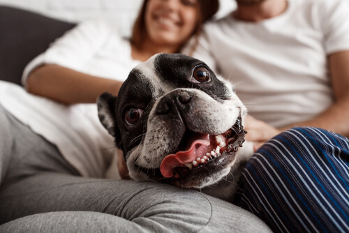 Conexión entre perros y humanos