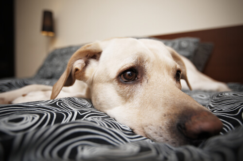 Consecuencias de castigar a tu perro