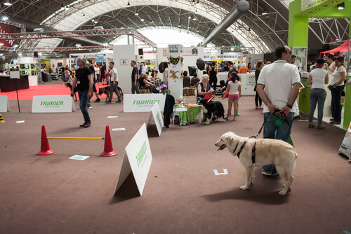 Cómo llevar a tu perro a una exhibición