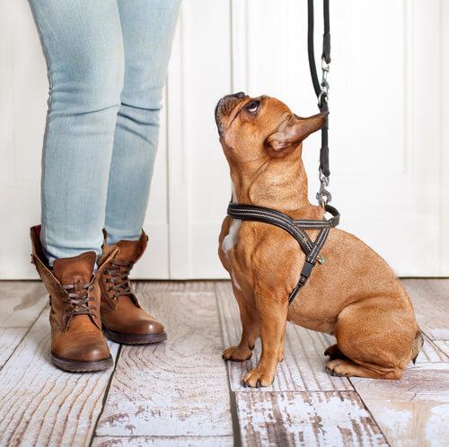 Cuándo puede un cachorro salir a pasear