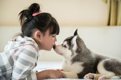 Qué hacer con un cachorro que todavía no puede salir de casa