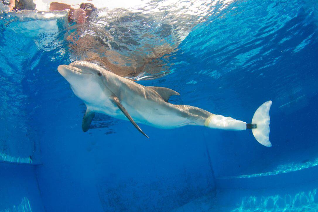 Delfín Winter: historia verdadera
