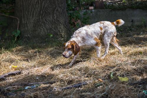 Diferencia entre animales salvajes y domésticos: perro