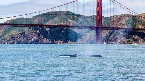 Dónde observar ballenas