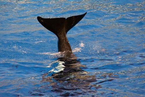 Dónde se pueden ver ballenas