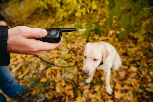 Educación y adiestramiento en perro