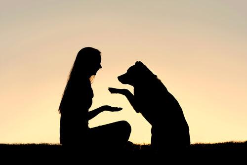 ¿Qué es la educación canina en positivo?