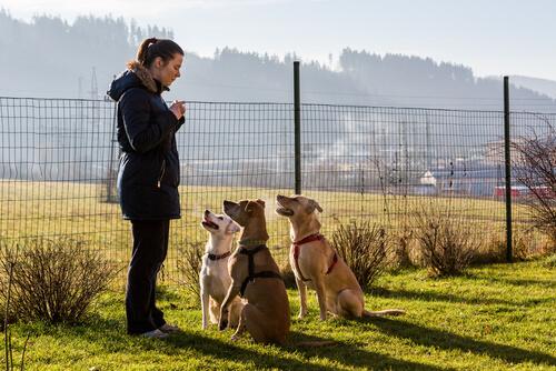 Educación positiva en canes
