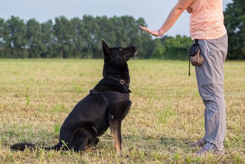 Educación positiva en perros