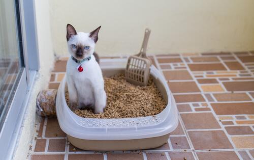 Enfermedades urinarias en los gatos