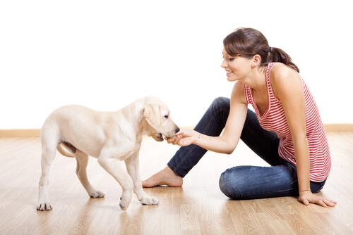 Estimular a un cachorro