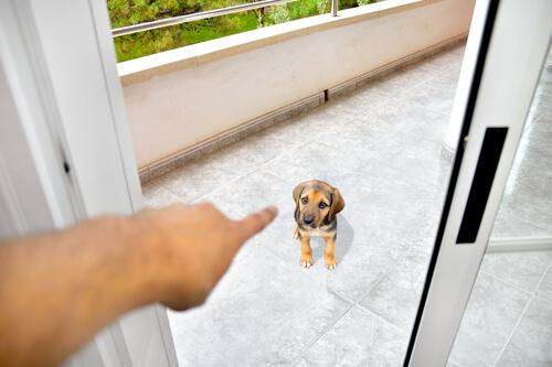 Consejos para ganar el respeto de un perro