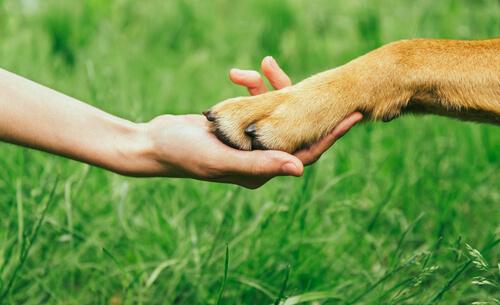 ¿Cómo ganarse el respeto de un perro?