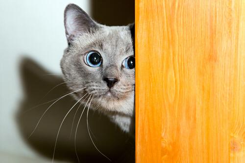 ¿Cómo ganarse la confianza de un gato?