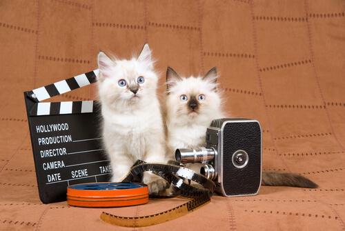 El gato en el cine: películas