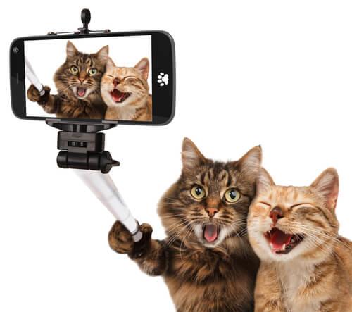 El gato en el cine: un recorrido histórico