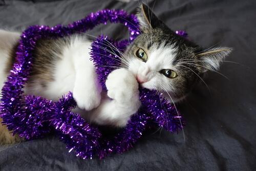 Por qué un gato muerde ropa: causas