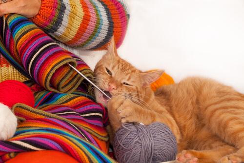 Por qué un gato muerde ropa: motivo