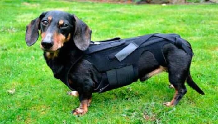 Tipos de hernias en perros