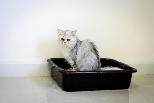 Infecciones urinarias en gatos: tratamiento